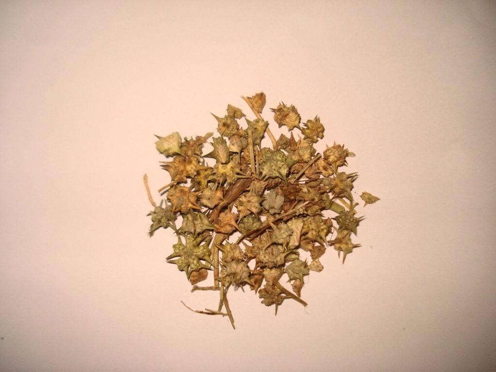 Listy sušeného kotvičníku zemného