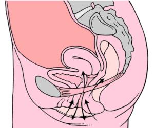kegelove cviky - svalstvo u zeny
