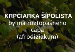 Krpčiarka šípolistá - bylina roztopašného capa, afrodiziakum