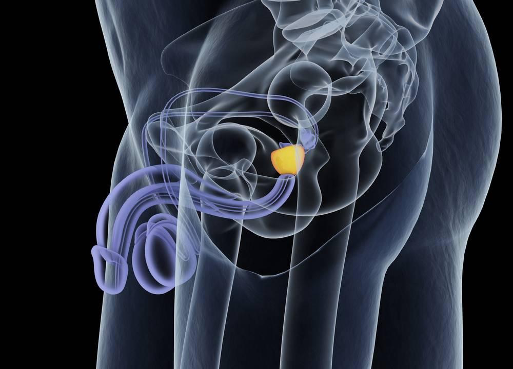 Prostata alebo predstojná žľaza