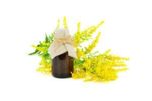 Zlatobyľ obyčajná - kvet, olej