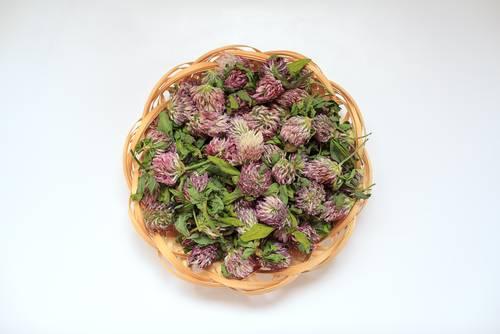 Sušené kvety ďateliny lúčnej