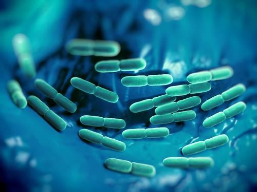 Baktérie Lactobacillus