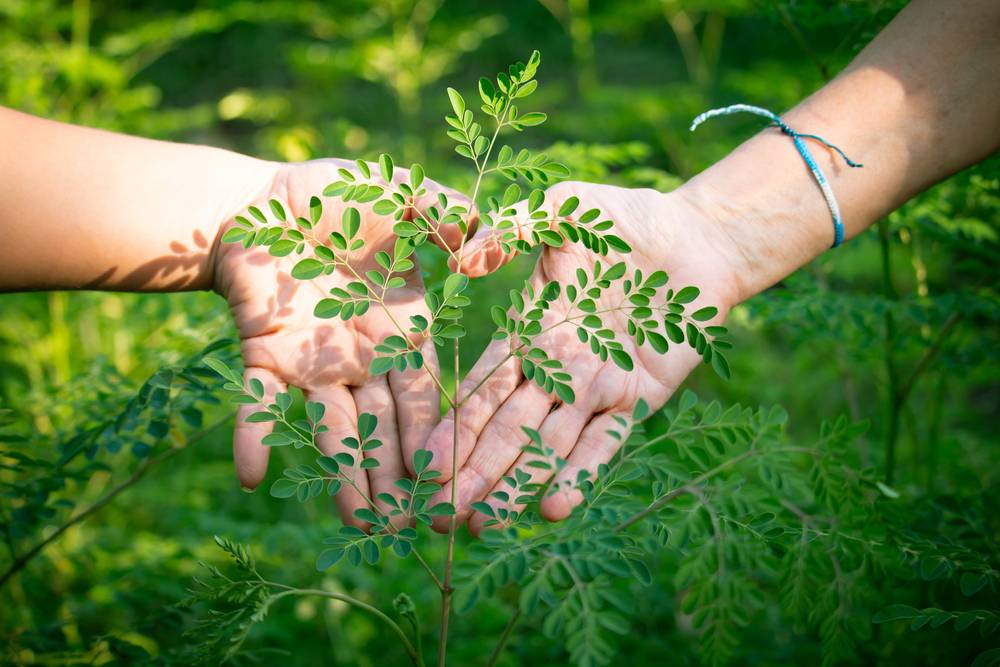 Moringa ako účinné afrodiziakum pre mužov i ženy