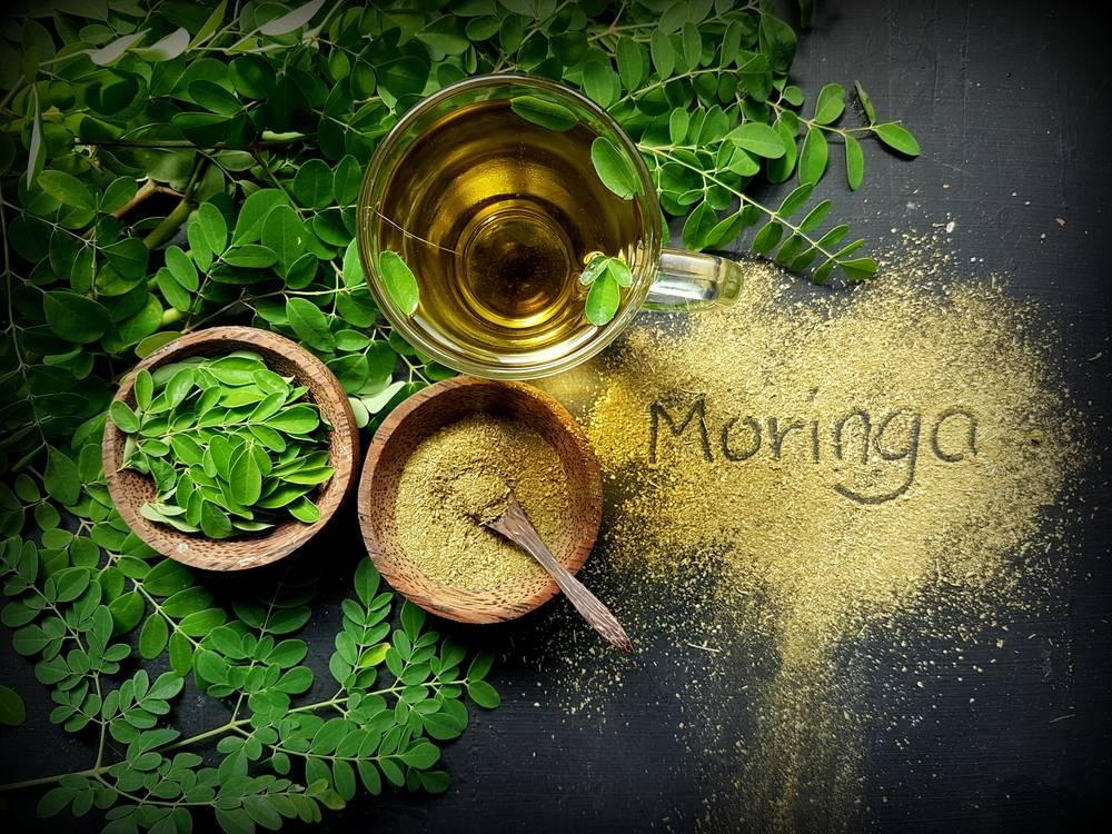 Moringa oleifera - rastliny, listy, prášok a čaj z listov